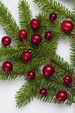 Arándanos en una ramificación del árbol de navidad. Imágenes de archivo libres de regalías