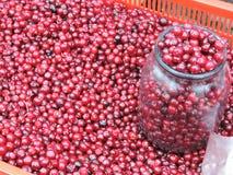Arándanos maduros rojos Foto de archivo libre de regalías