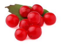 Arándanos rojos maduros Imagen de archivo libre de regalías