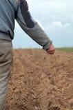Arêtes de pomme de terre images libres de droits