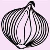 żarówki cebuli wektor Zdjęcie Royalty Free