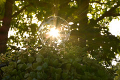 Żarówki z zielonymi roślinami dla ratować energetycznego pojęcie Zdjęcia Stock