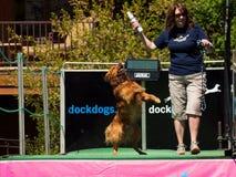 Ar grande de DockDogs Foto de Stock Royalty Free