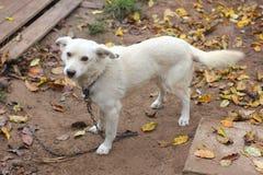 Ar livre branco do cão no outono foto de stock