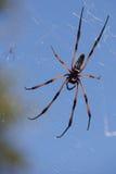Araña 1 de la palma Foto de archivo