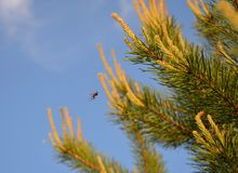 araña Fotografía de archivo
