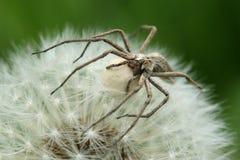 Araña Foto de archivo