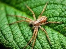 Araña. Fotos de archivo