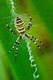 Araña Imagenes de archivo