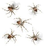 Araña Imagen de archivo libre de regalías