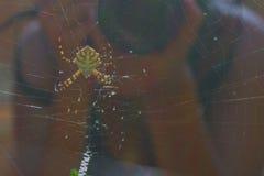 ¿Araña? Imagenes de archivo