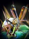Araña amarilla (bruennichi del Argiope) y cacto Foto de archivo libre de regalías