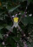 Araña amarilla con adorno hermoso Imágenes de archivo libres de regalías