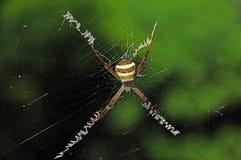 araña Amarillo-marrón Imágenes de archivo libres de regalías