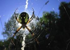 Araña - Argiope Aurantia Imagen de archivo
