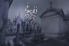 Araña asustadiza del cementerio Imagenes de archivo