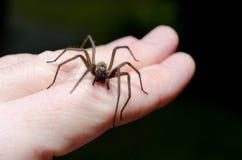 Araña asustadiza grande a mano foto de archivo libre de regalías