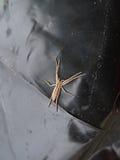 Araña blanca Imagen de archivo libre de regalías