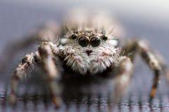 Araña blanca Fotos de archivo libres de regalías
