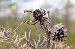 Araña cerca del topetón Fotografía de archivo libre de regalías