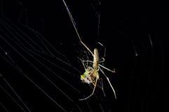 Araña con botines en el Web Foto de archivo libre de regalías