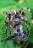 Araña con el retén imagen de archivo