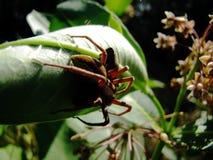 Araña con la presa de la polilla fotos de archivo