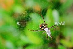 Araña con su presa imagenes de archivo