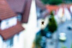 Araña con Web imagen de archivo