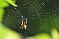Araña de giro Imágenes de archivo libres de regalías