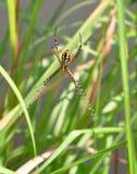 Araña de jardín Fotos de archivo
