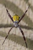 Araña de jardín hawaiana Imágenes de archivo libres de regalías