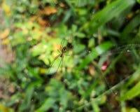 Araña de la avispa, un arácnido exótico del Orbe-tejedor sobre un fondo colorido imponente fotos de archivo libres de regalías
