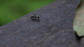 Araña de la cámara lenta en la montaña Manyueyuan Forest Recreation Area nacional almacen de video