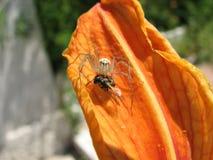 Araña de la comida Fotografía de archivo