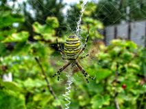 Araña de la flor Fotografía de archivo libre de regalías