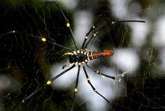 Araña de la naturaleza Imagen de archivo libre de regalías