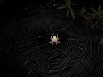 Araña de la noche en patio trasero fotos de archivo libres de regalías