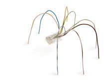 Araña de los alambres Fotografía de archivo