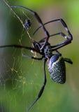 Araña de madera gigante Imágenes de archivo libres de regalías