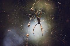 Araña de oro del orbe fotografía de archivo libre de regalías