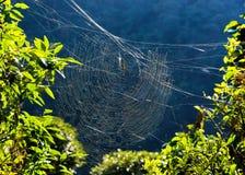 Araña de oro del tejedor del orbe en su web Imagen de archivo libre de regalías
