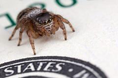 Araña de salto en los cientos dólares Foto de archivo