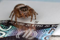 Araña de salto y veinte euros fotos de archivo