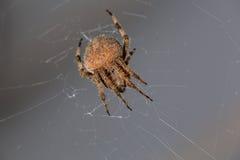Araña defensiva 2 fotografía de archivo libre de regalías