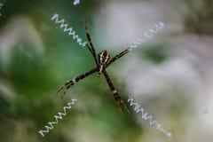 Araña del tejedor Foto de archivo libre de regalías