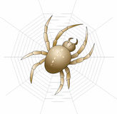 Araña del vector Imágenes de archivo libres de regalías