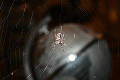 Araña delante de una telaraña imagen de archivo libre de regalías