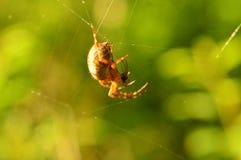 Araña depredadora en los web de su web con la presa Foto de archivo