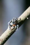Araña en árbol Imágenes de archivo libres de regalías